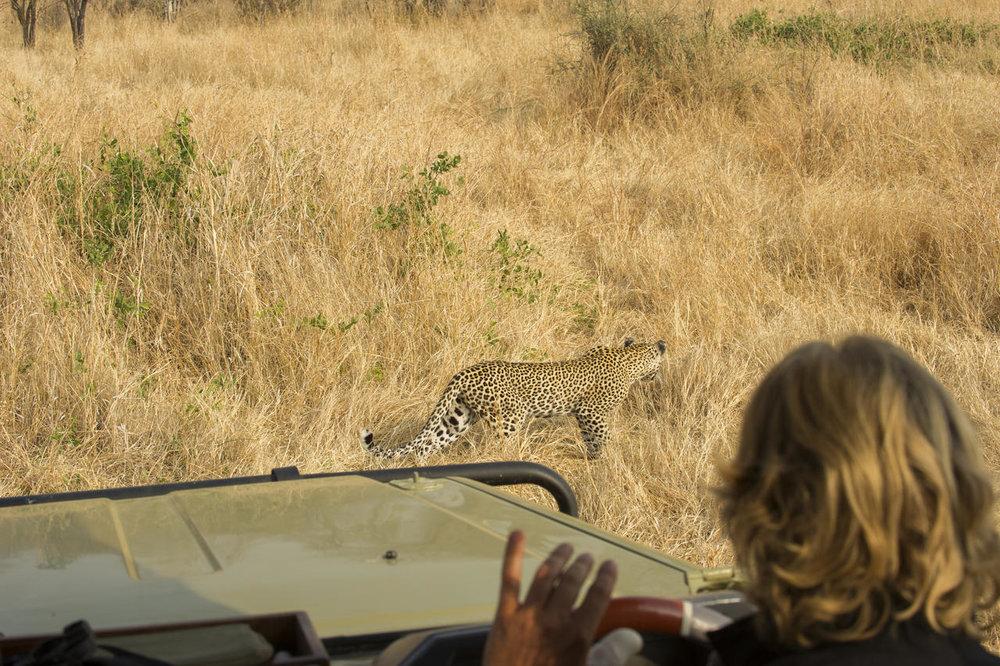 Safari 100% félins en Tanzanie - léopard à Kwihala