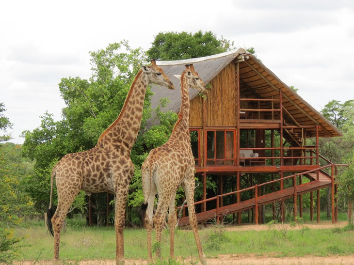 Girages à Pezulu Tree House