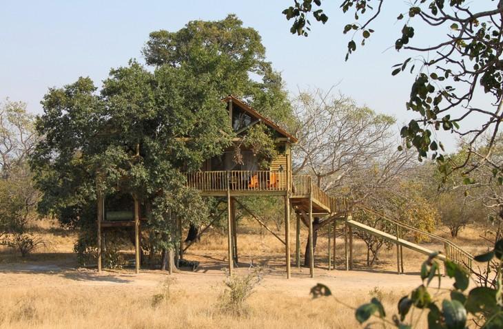 Arbre au milieu d'une cabane à Pezulu Tree House
