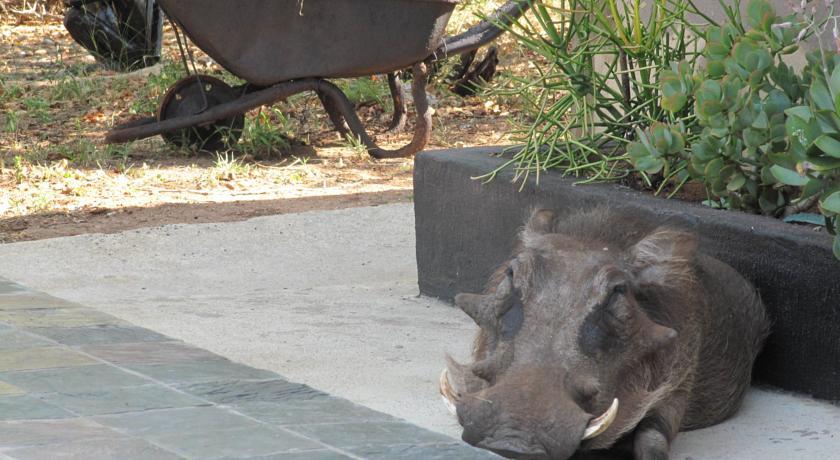 Pumba au African Rock lodge