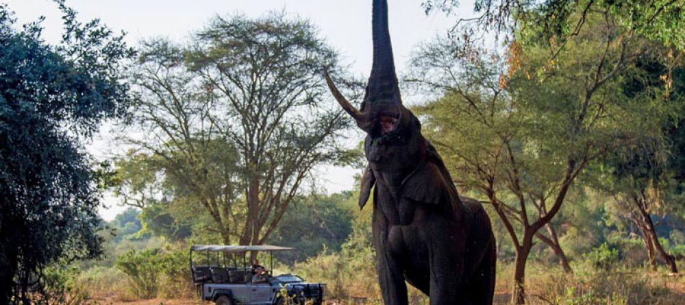 Voyage de noces Kruget et Seychelles - éléphant à The Outpost