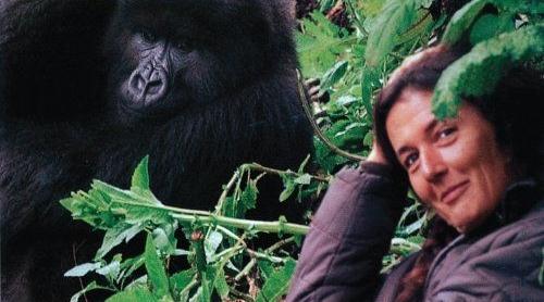 Dian Fossey et un gorille au Rwanda