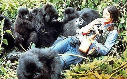 Dian Fossey au milieu des gorilles