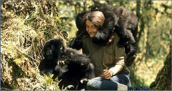 Dian Fossey entouré de gorilles
