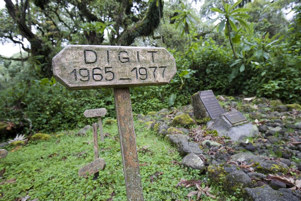 Tombe de Dian Fossey