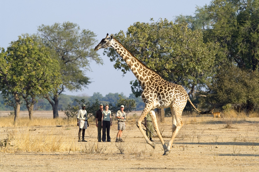 Safari à la Luangwa Safari House