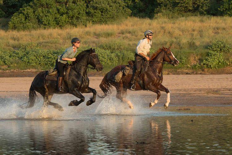 The Tuli Safari -cheval dans l'eau