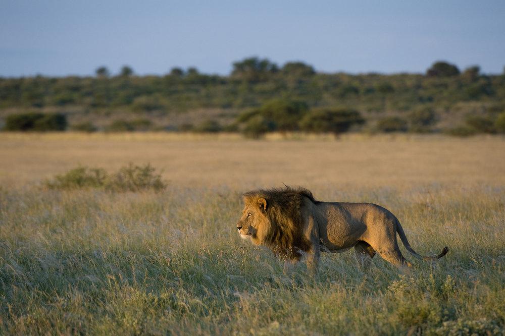 La Réserve du Kalahari Central