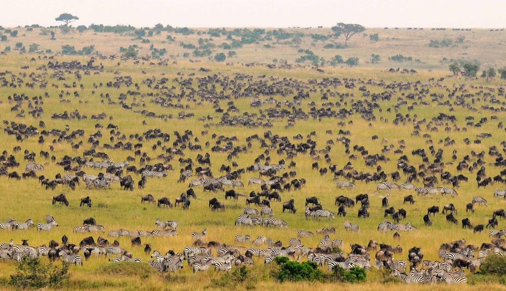 La Réserve de Masai Mara