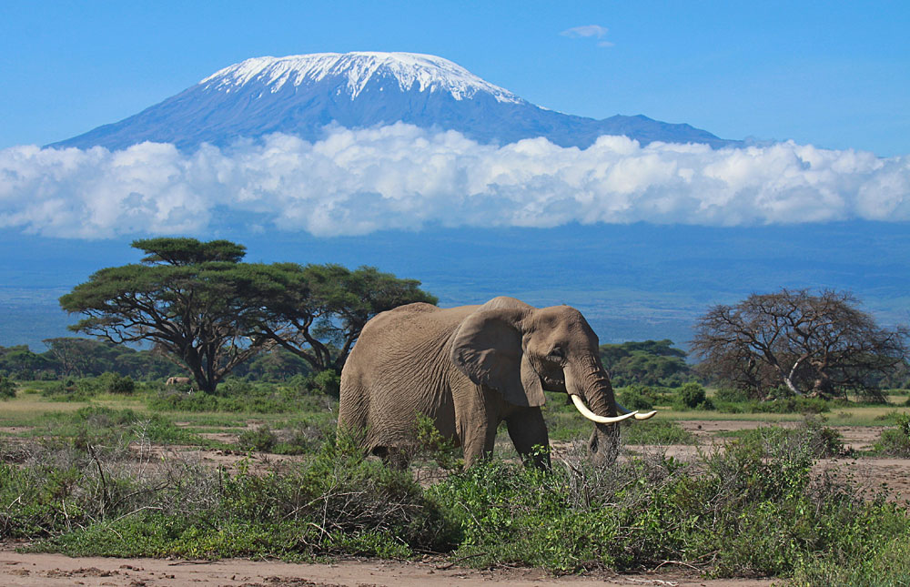 Le Parc National d'Amboseli