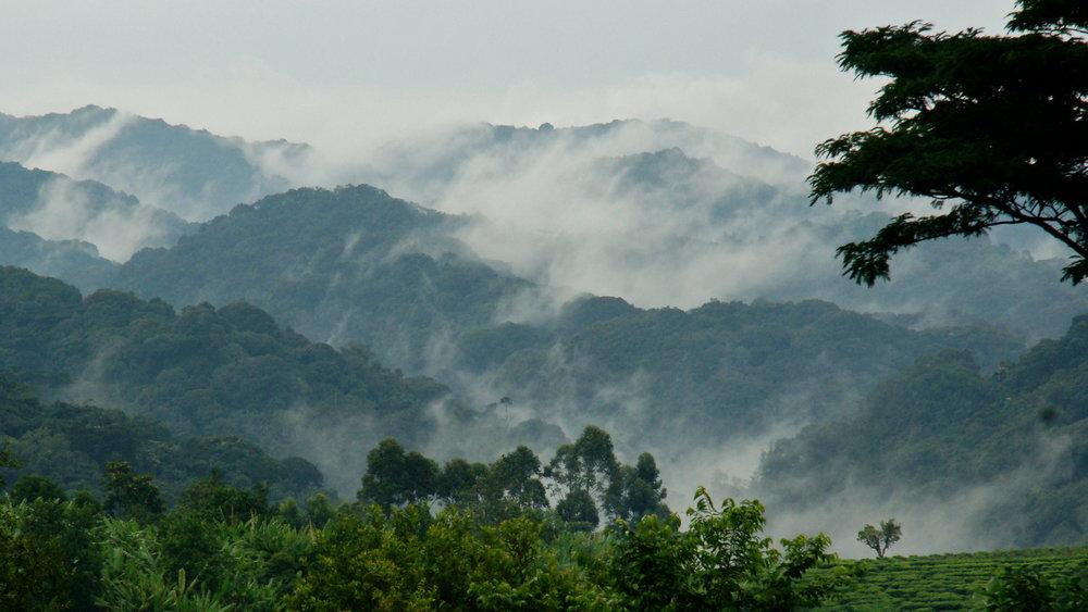 La Forêt Impénétrable de Bwindi