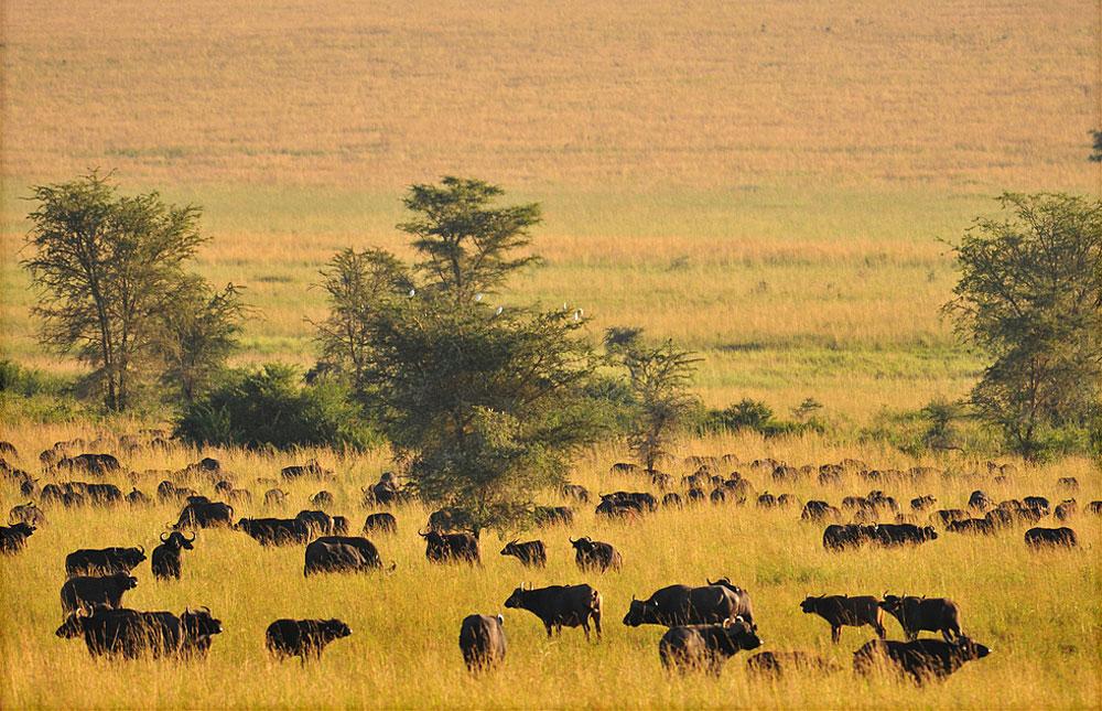Le Parc National de Kidepo