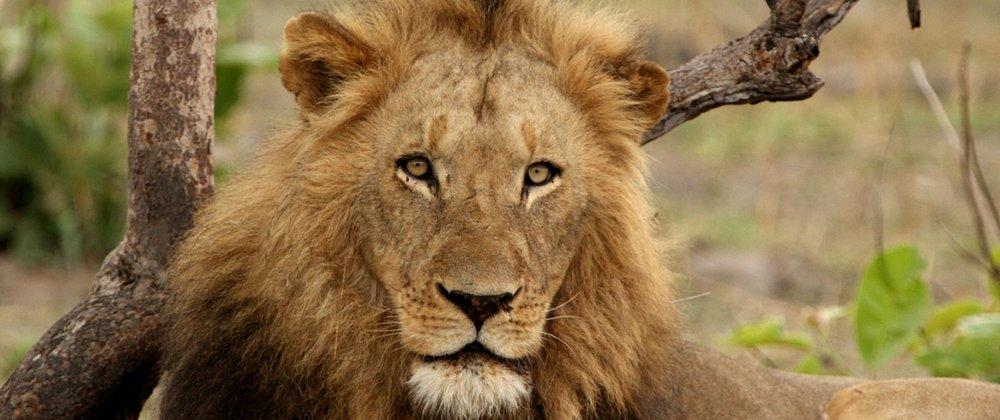 Kaingu Safari lodge9.jpg