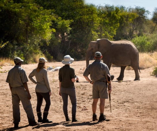 RockFig-Safari-Lodge_Walking-with-elephant_Panorama2_banner-1-545x455.jpg