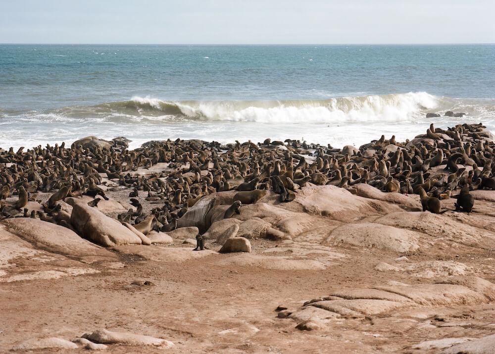 23Shipwreck-Lodge-Activities-Mowe-Bay-seal-colony.jpg