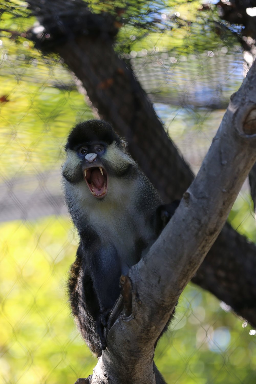 San Diego Zoo Monkey