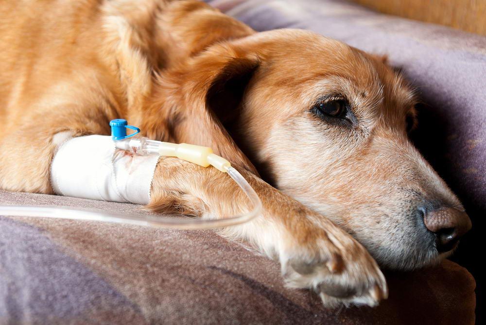 Hospitalization -