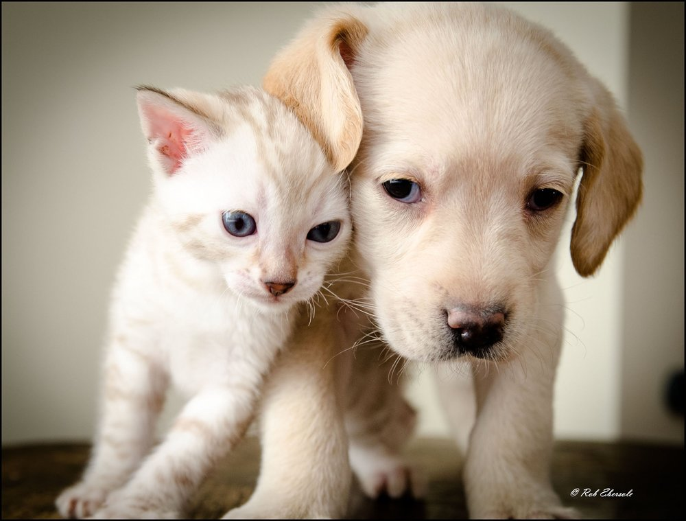 Puppy and Kitten Wellness -