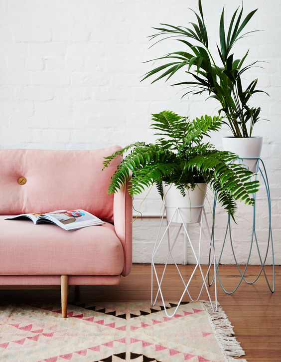 Standing plants. - and if you're ever looking for the perfect present for me? Ferns are my absolute favourite.