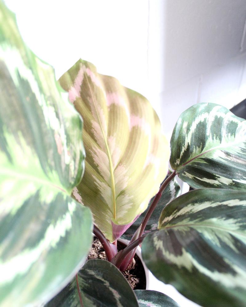 PlantCare.png
