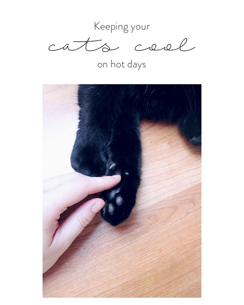 CatHeatwave.jpg