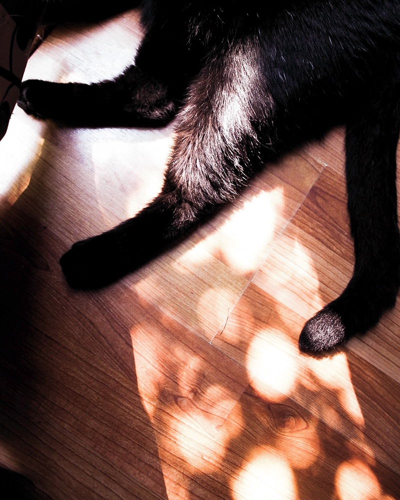 CatsCover.jpg