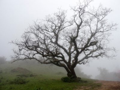 trees-in-the-landscape-in-the-fog-india small .png
