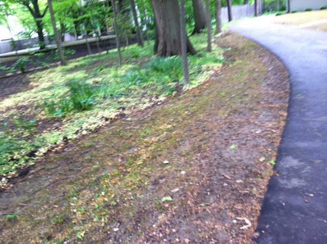eco lawn 2.jpg
