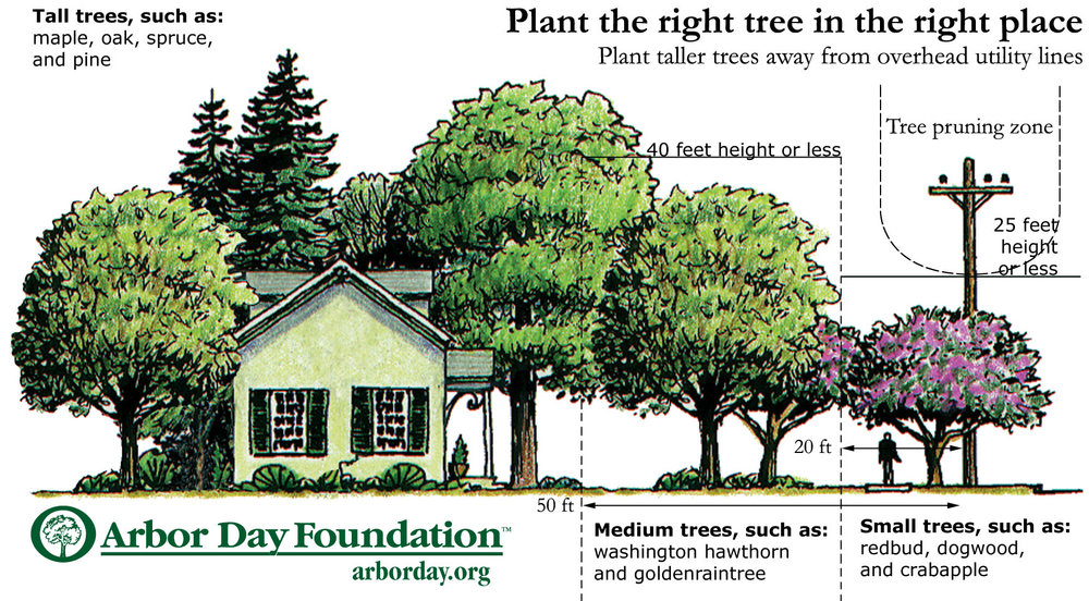 Image courtesy of Arbor Day Foundation