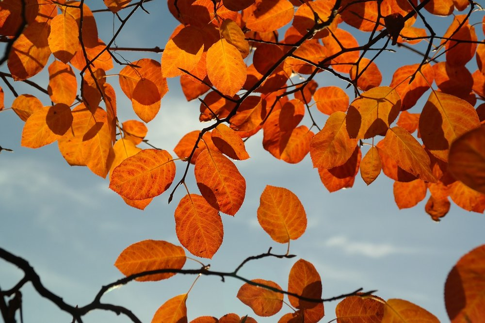 leaves-228109_1280.jpg
