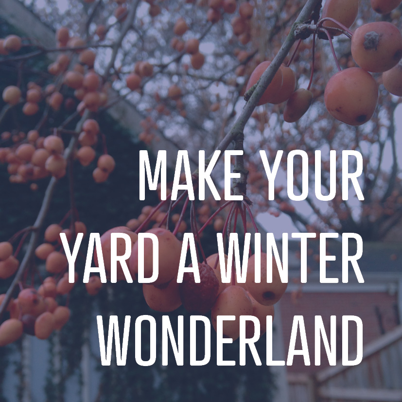 01-16-18 MAKE YOUR YARD A WINTER WONDERLAND.jpg