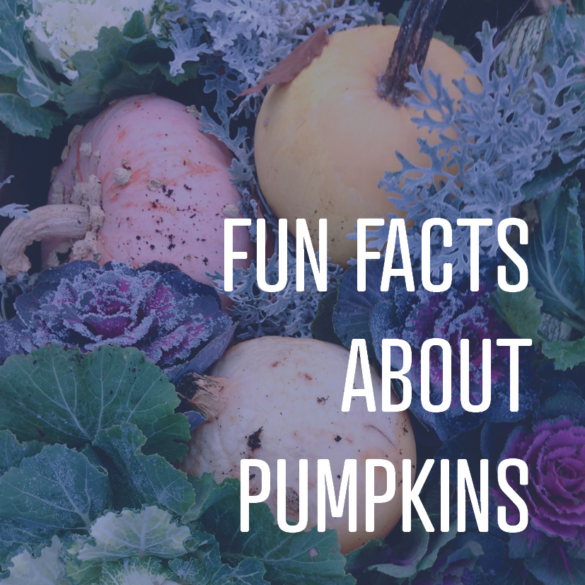 10-21-16 fun facts about pumpkins.png