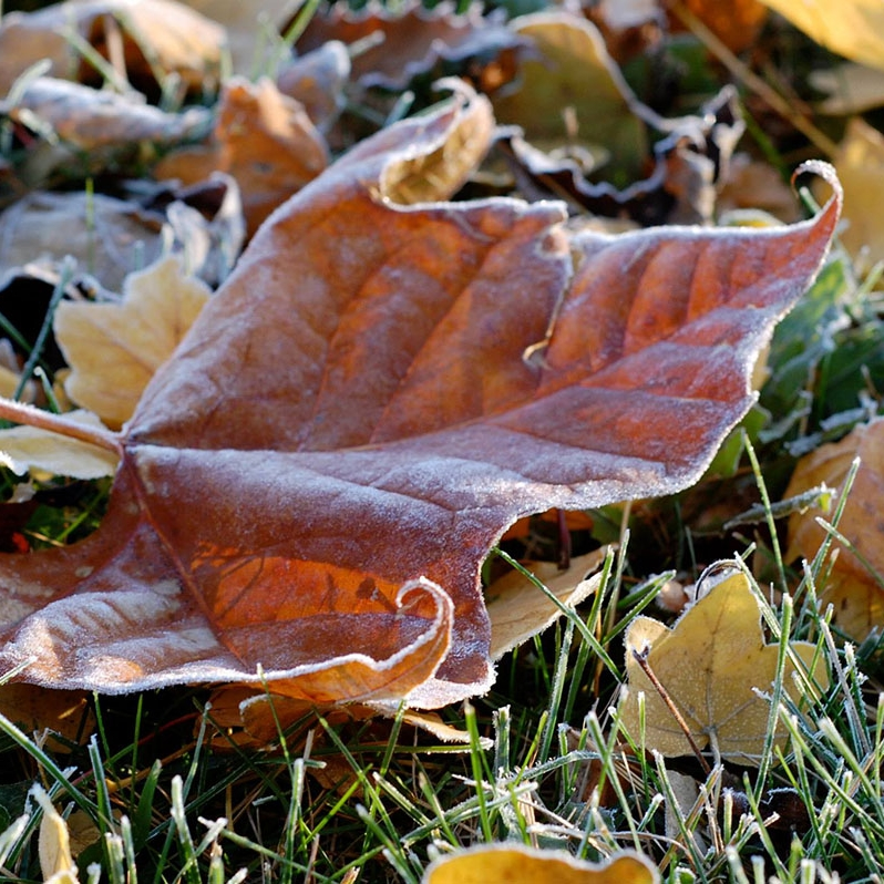 Leaf Pick-Up and Leaf Removal Indianapolis