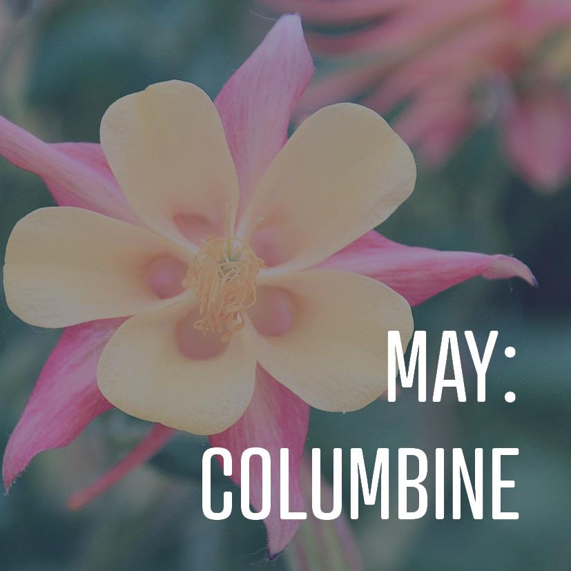 05-05-17 may- columbine.jpg