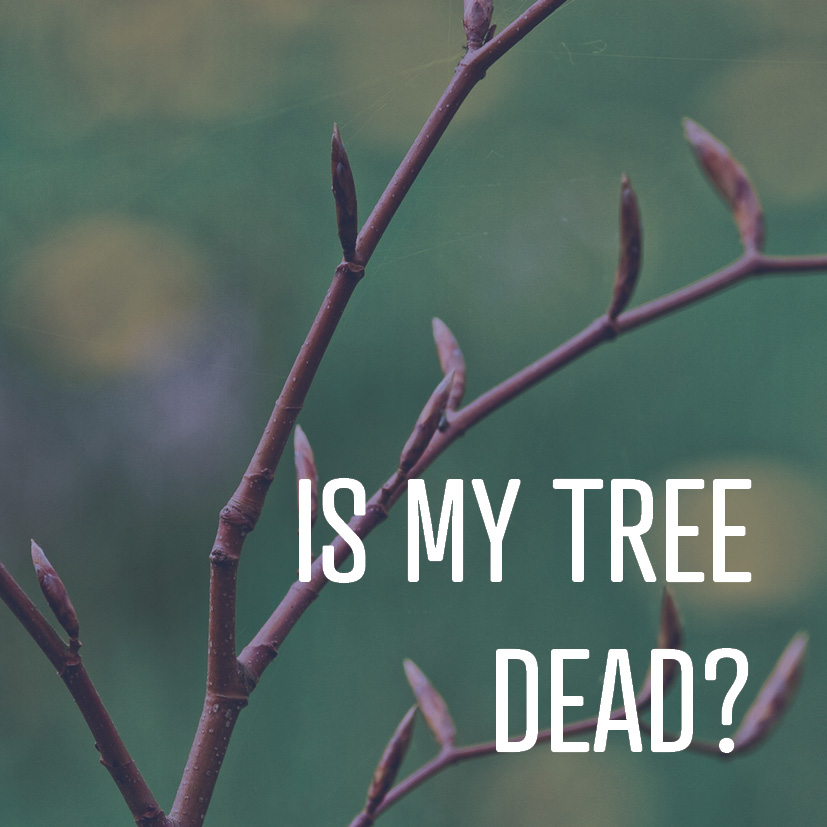 03-27-18 is my tree dead.jpg
