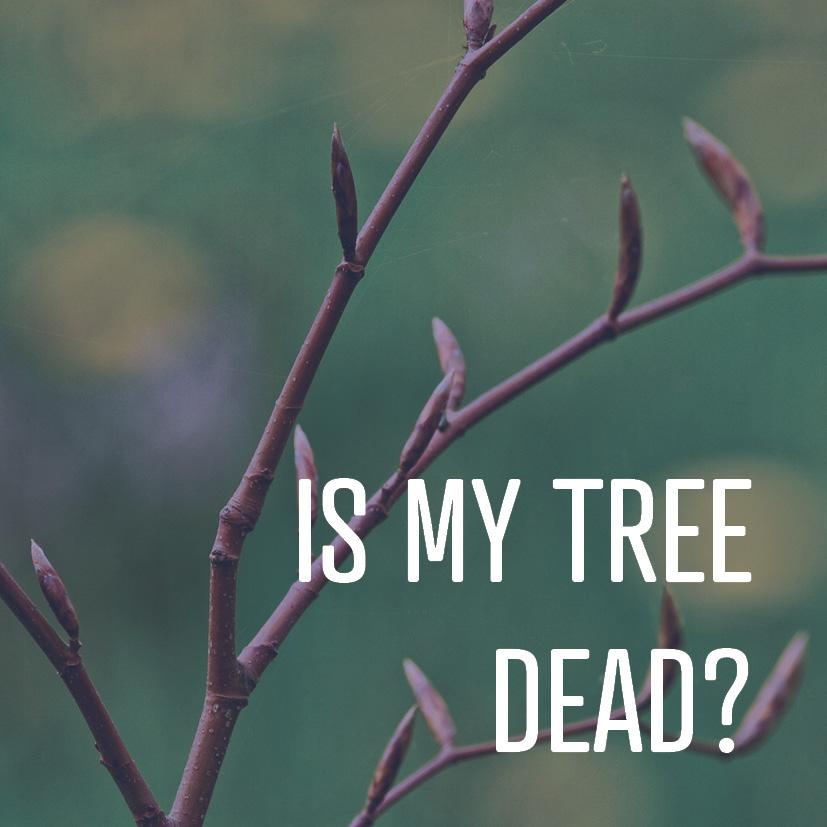 03-27-18 is my tree dead.jpg