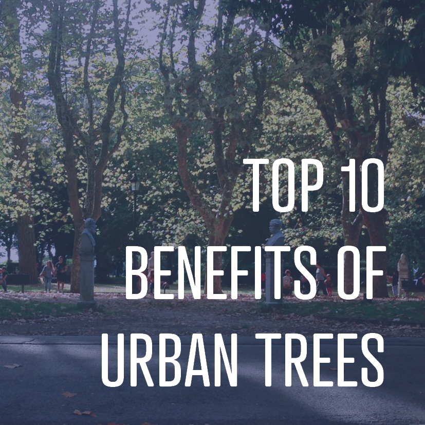 Do you know what trees can do for you? It's an impressive, surprising list. This one is a must-read.