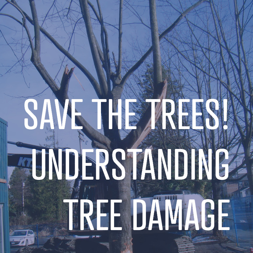 Learn how trees can be damaged during landscape maintenance and construction projects.