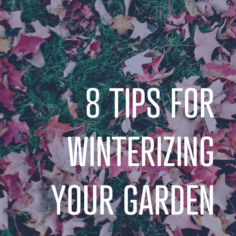 11-11-16 8 tips for winterizing your garden.jpg