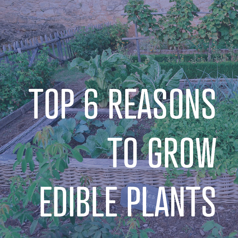08-22-16 top 6 reasons to grow edible plants.jpg