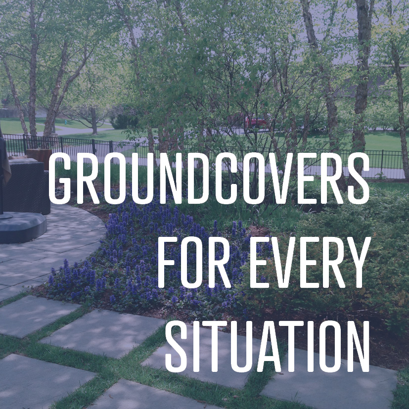 05-19-17 groundcovers for every situation.jpg
