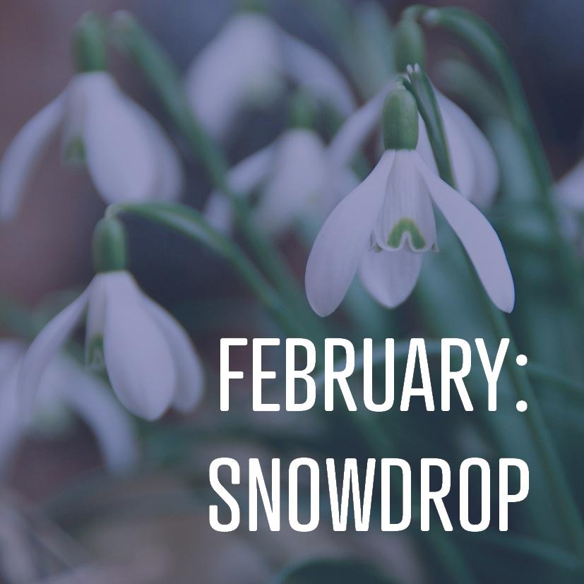 02-10-17 february- snowdrop.jpg