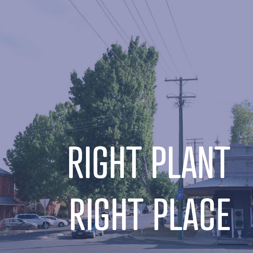 01-15-16 right plant, right place.jpg