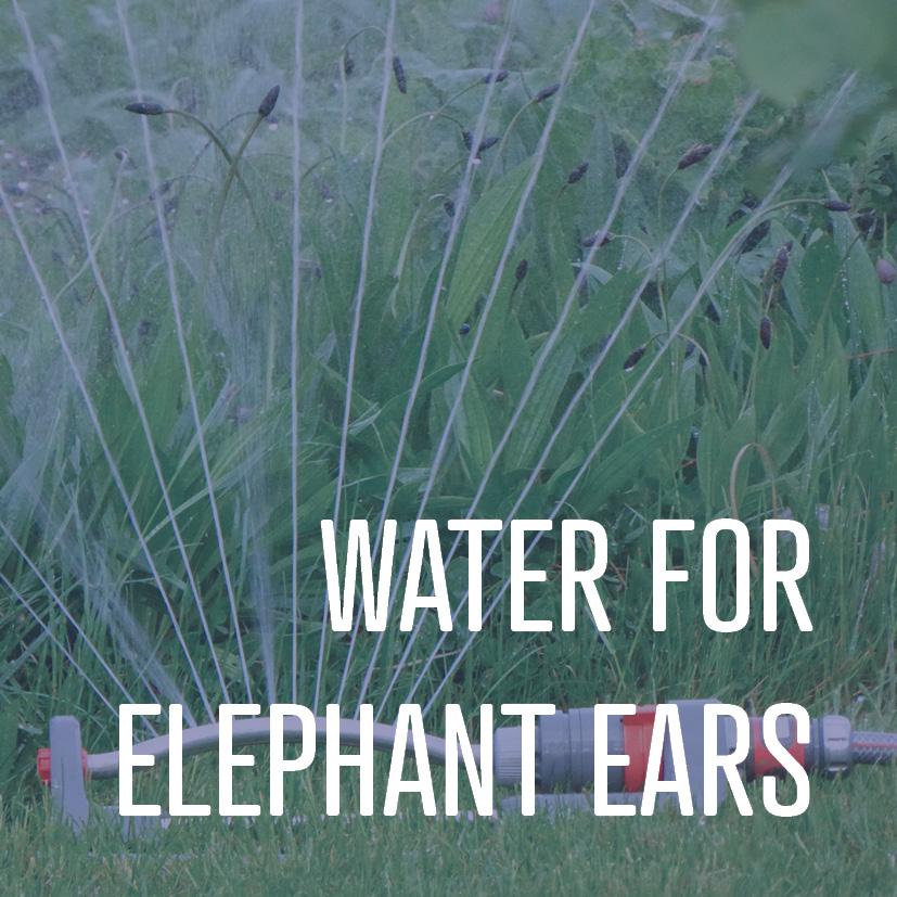 04-08-16 water for elephant ears.jpg