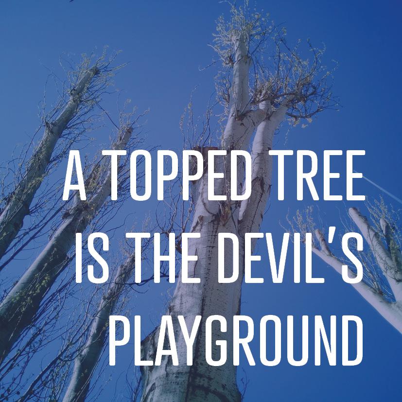 01-11-16 tree topping.jpg
