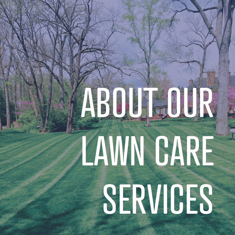 05-13-16 about our lawn care services.jpg