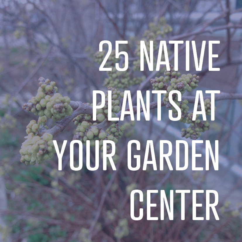 03-31-17 25 native plants at your garden center.jpg