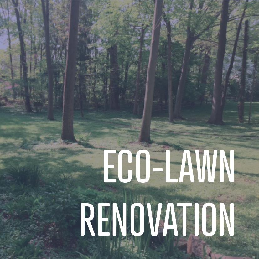 04-22-16 eco-lawn renovation.jpg