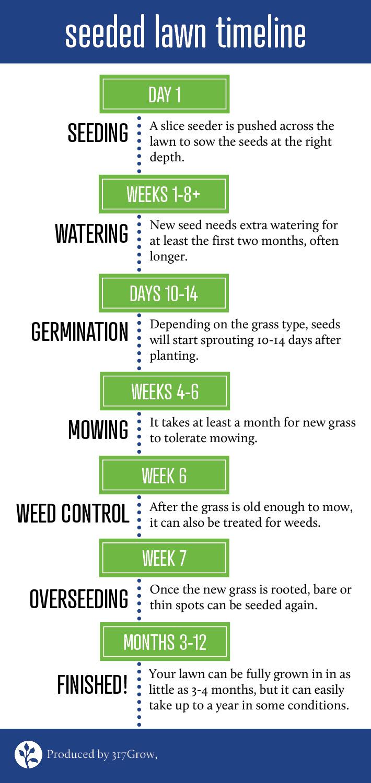 seeded lawn timeline.jpg