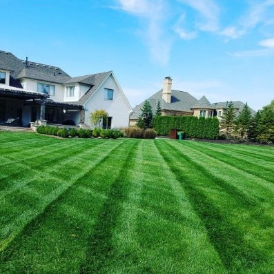 A new RTF lawn just two seasons after seeding from bare soil.